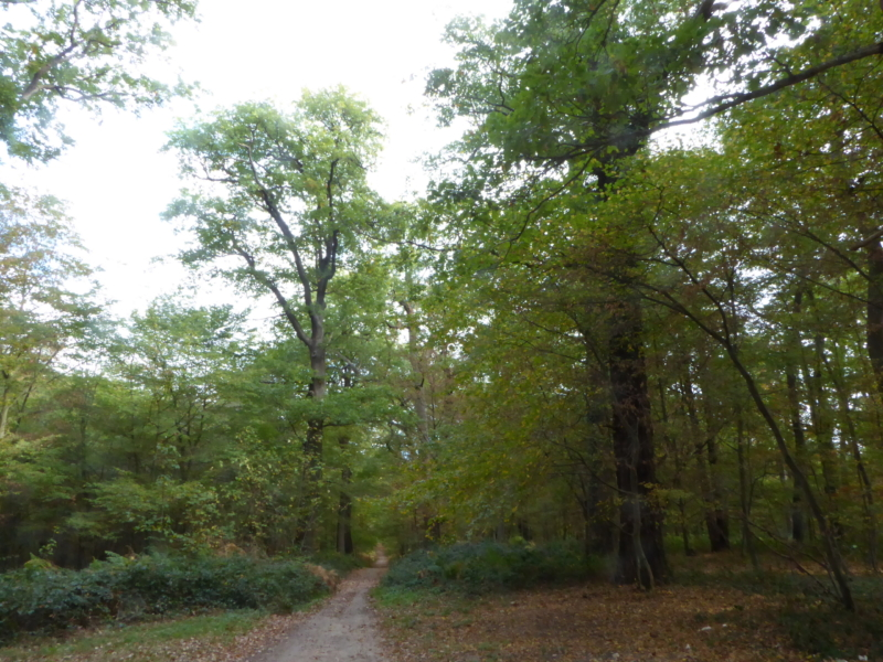 2018-10-27 Forêt de Saint-Germain-en-Laye