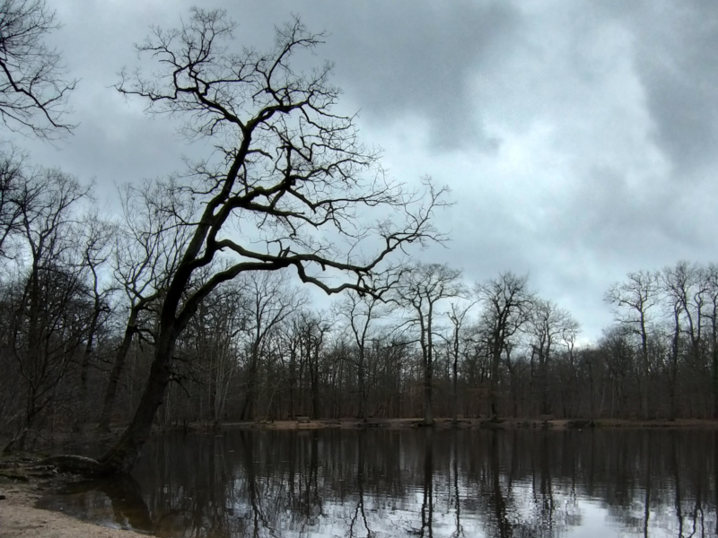 Forêt de Saint-Germain-en-Laye-2