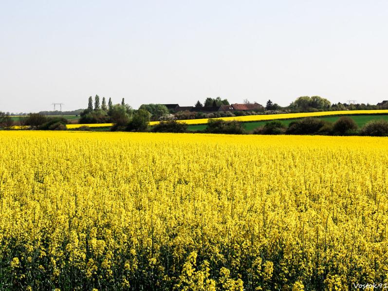 La plaine de l'Hurepoix par vostok 91 licence CC BY-SA 2.0 recadrée